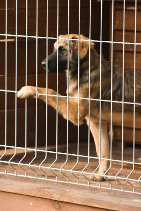 Put My Dog Up For Adoption Uk