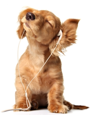 golden_puppy_listening