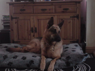 Max GSD