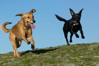 Happy dog recall!