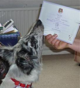 Delphi examines her Good Citizen dog certificate