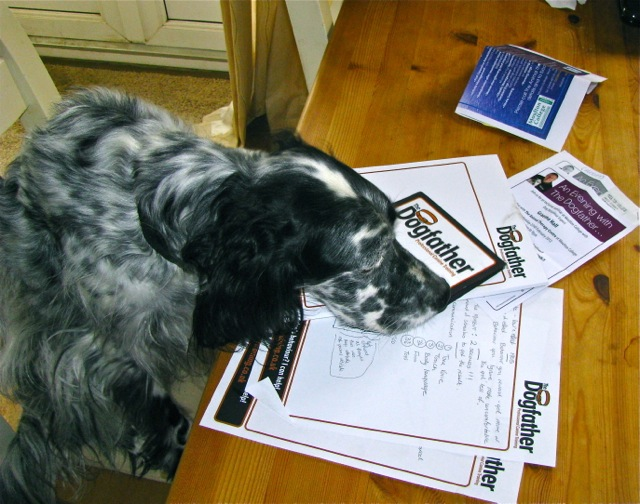 Fleadle, the most studious Cocker Spaniel in the world!