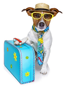 jrt_sunglasses_holiday