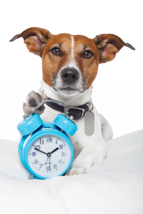 This Jack Russell really DOES know the time!