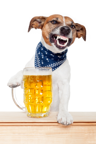 aggresive_jrt_with_beer