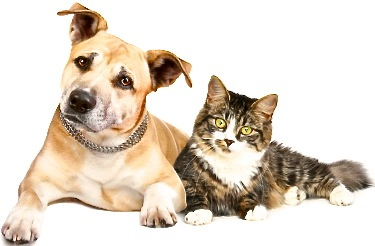 dog_and_cat1
